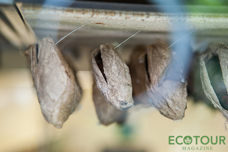 Cocoons Niagara Falls Butterfly Conservatory