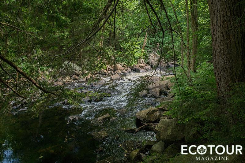 Haliburton Forest Treetop Canopy Tour