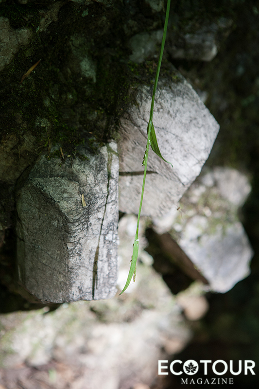 Orthoclase Crystals Ontario